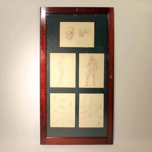 Framed Anatomy Drawing