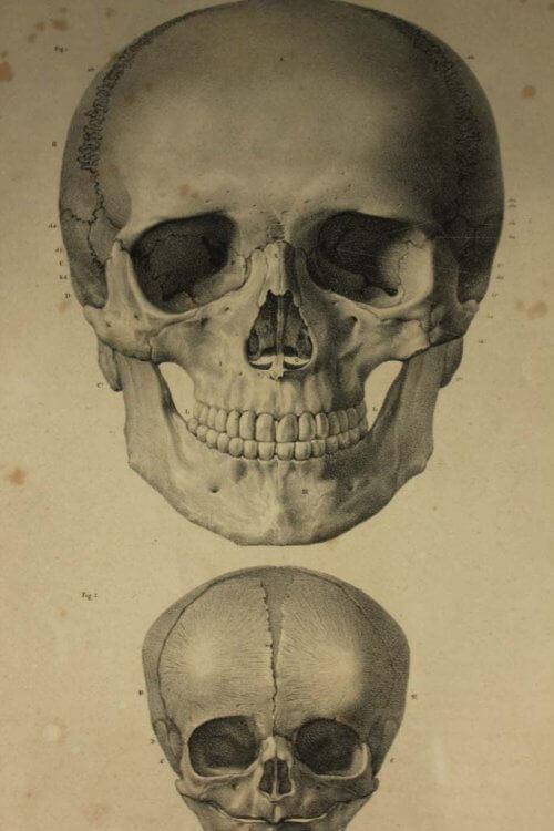 19Th century human skull prints