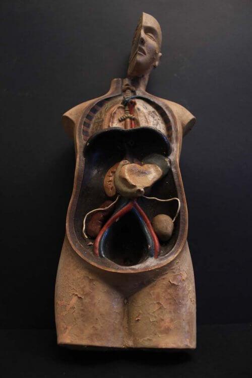 20th century anatomical figure