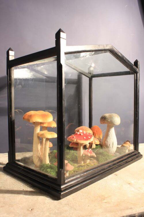 terrarium silk mushrooms