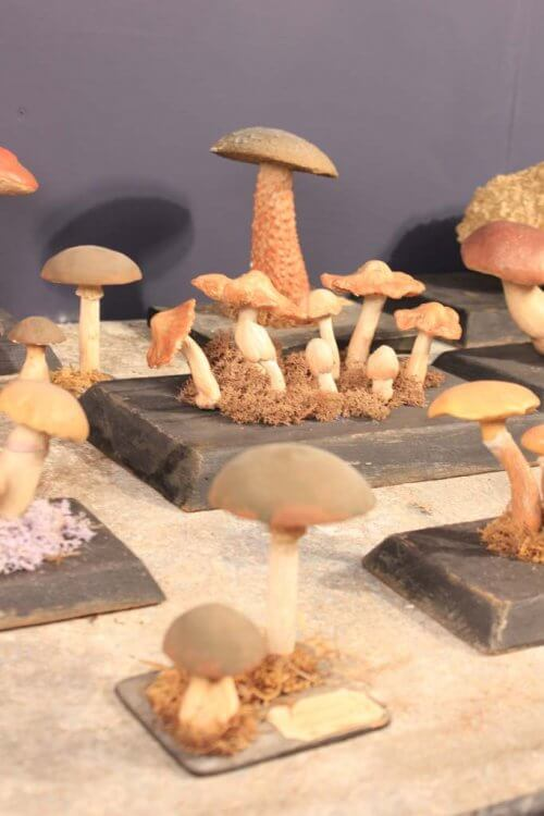 scientific mushroom studies