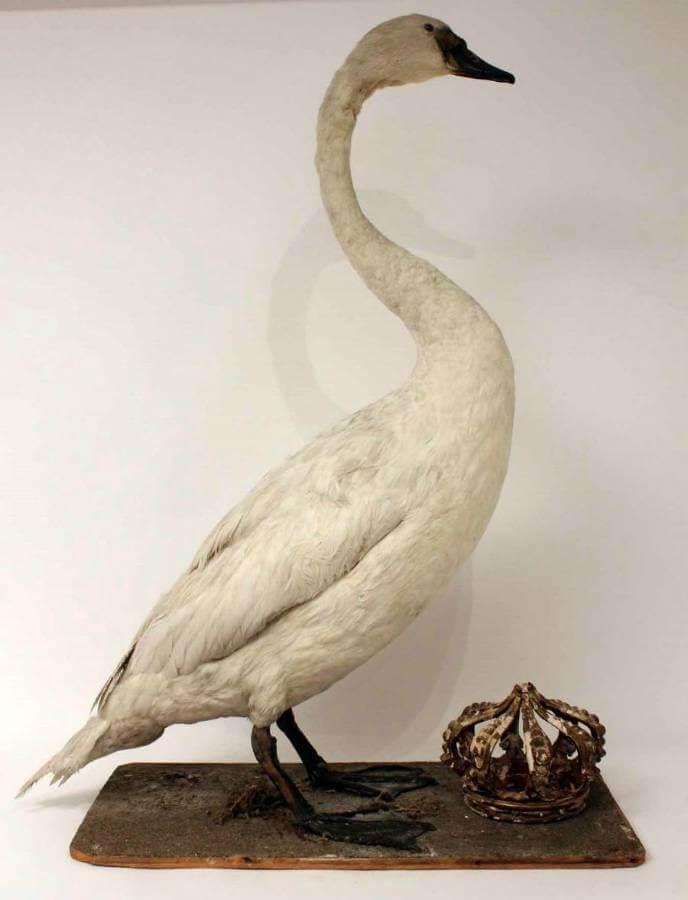 19Th Century Swan