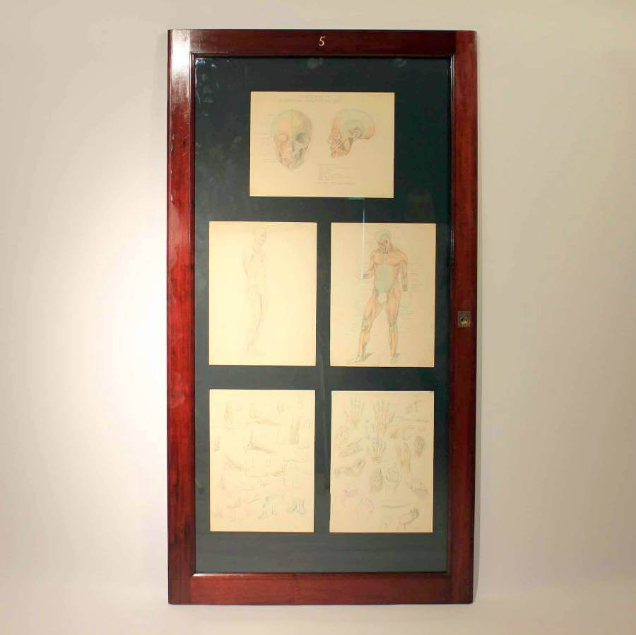 Framed Anatomy Drawing