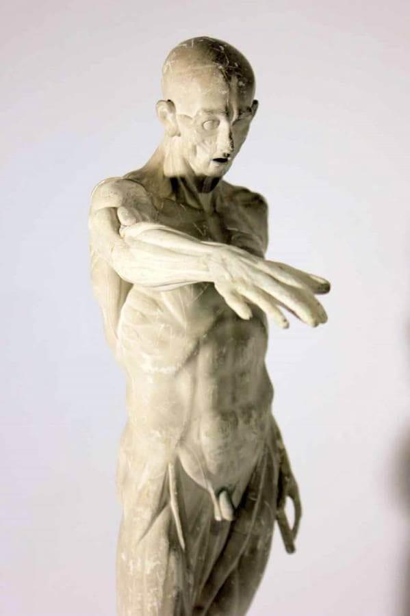 Late 19th Century Anatomical Plaster Figure