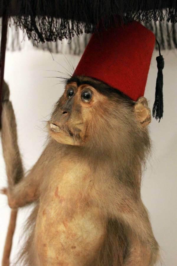 Glass Monkey Antiques