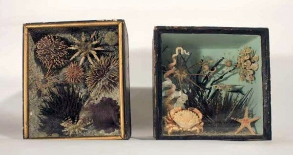 A Rare Pair Of 19Th Taxidermy Ocean Dioramas