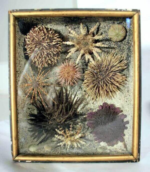 A Rare Pair Of 19Th Taxidermy Ocean Dioramas